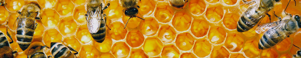 Exploring the production of honey