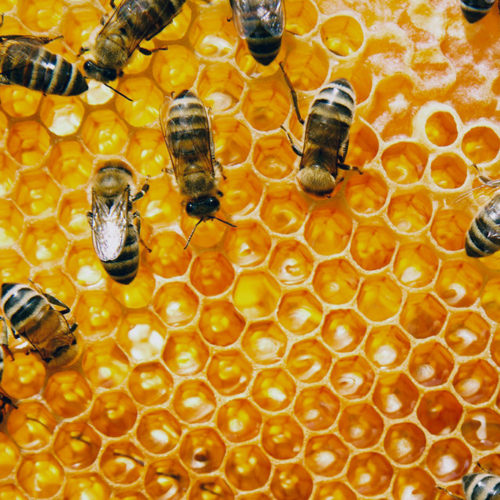 7.exploring-the-production-of-honey
